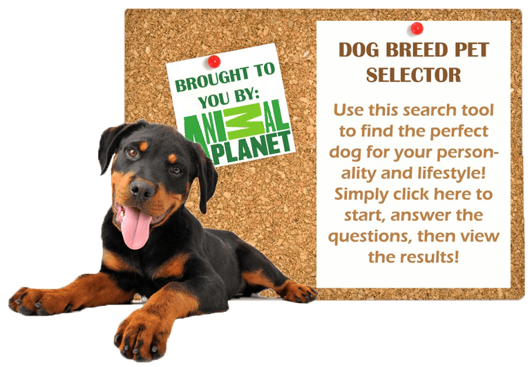 Dog Breed Selector 2 (1)