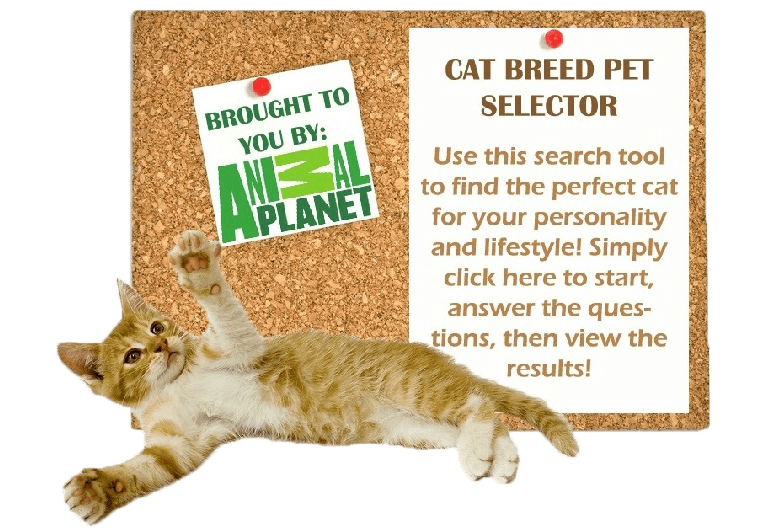 Cat Breed Selector 2 (1)